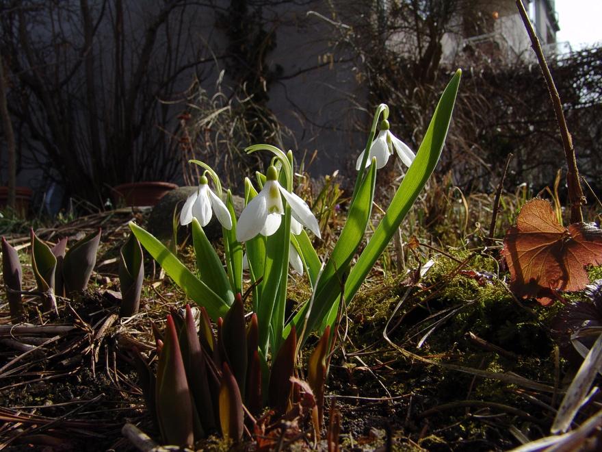 Foto von Montag, 27.03.2006