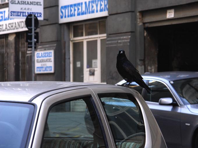 Foto von Donnerstag, 29.11.2007