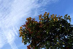 Foto von Sonntag, 11.10.2009