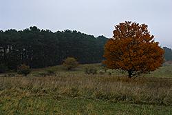 Foto von Sonntag, 01.11.2009