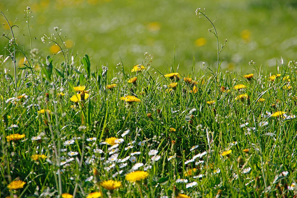 Foto von Donnerstag, 21.04.2011