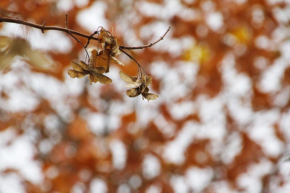 Foto von Donnerstag, 10.11.2011