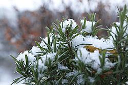 Foto von Dienstag, 11.12.2012